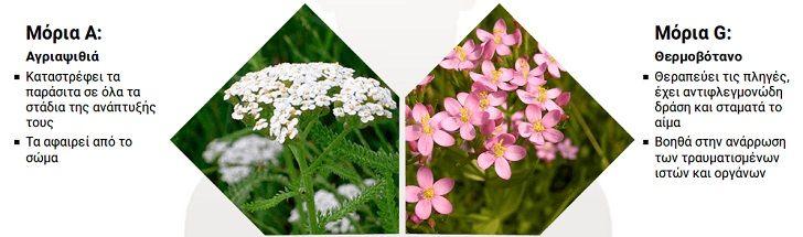 germitox herbs