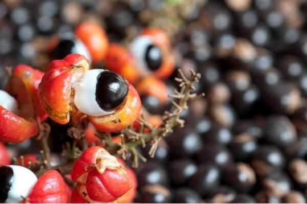 Τα φρούτα και οι ρίζες του Guaran